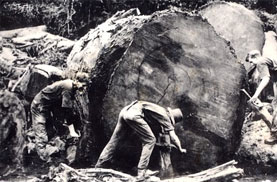 An end to logging