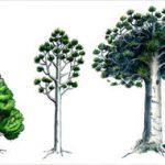 Botanical Details