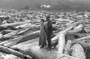 The History Of Kauri